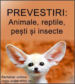prevestiri superstitii animale